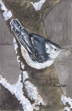 2002 Little Gymnast - White-Breasted Nuthatch