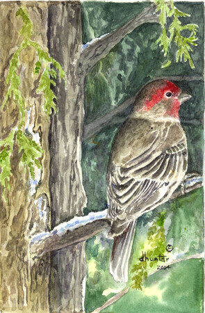2003 Welcomed Visitor - Purple Finch