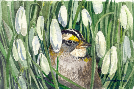 2004 White-Throated Sparrow