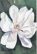 Magnolia   Dorothy dhunter Adams SOLD