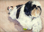 Molly the Shih Tzu   Dorothy dhunter Adams  SOLD