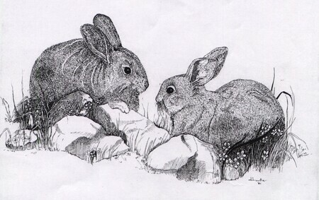Rabbits   Dorothy dhunter Adams