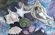 SHELL COLLECTION   Dorothy d.hunter Adams  FRAMED