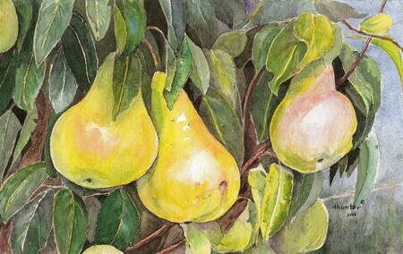 Translucent Pears 2008   Poires de France   pears adobe   Dorothy dhunter Adams   Copy