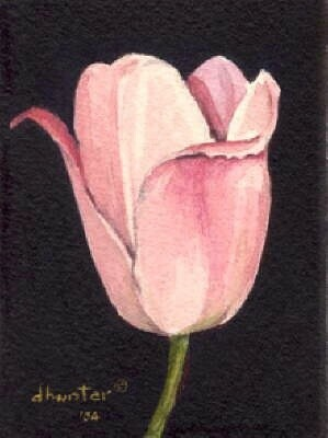 TULIP SERIES   FAITH   Dorothy dhunter Adams  SOLD