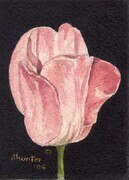 TULIP SERIES   LOVE   Dorothy dhunter Adams   SOLD