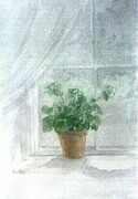 White Geranium   Dorothy dhunter Adams    SOLD   -  NEEDS A DESCRIPTION