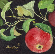 Wild Apples I   Dorothy dhunter Adams   SOLD