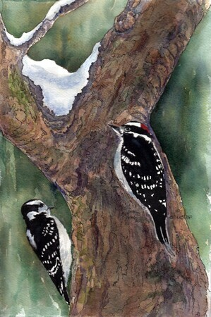 Woodpecker Pair - Downy & Hairy - Dorothy dhunter Adams